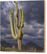 In Search Of That Perfect Saguaro  Wood Print