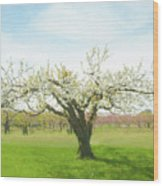 In Spring's Embrace Wood Print