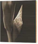 In The Beginning Gladiola Flower Bud Sepia Wood Print