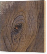 In The Eye Of The Elephant Wood Print