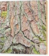 In The Forest Art Series - Tree Bark Patterns 1  Wood Print