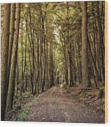 In The Forest Cathedral  Wood Print