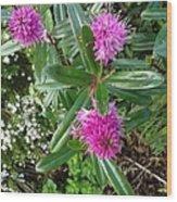 Hebe Bush In The Garden Wood Print