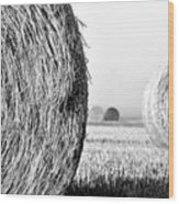 In The Hay -black And White Wood Print