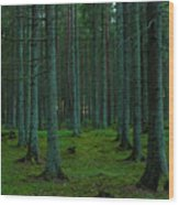In The Middle Of The Forest Wood Print