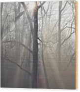 In The Morning Wood Print by Bill Cannon