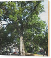 In The Neutral Ground Wood Print