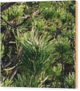 In The Pines Wood Print