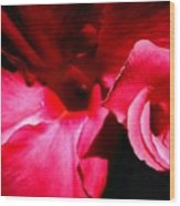 In The Pink 1 Wood Print