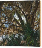In The Shade Of A Florida Oak Wood Print
