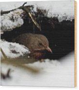 In The Shelder. Eurasian Blackbird Wood Print