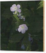 In The Spotlight Wood Print