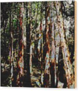 In The Trees Wood Print