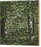 In The Woods Wc Wood Print