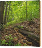 In The Woods_2 Wood Print