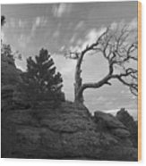 In Time There Is Motion Black And White  Wood Print by James Steele