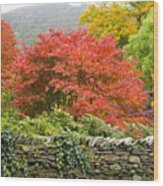 Incredible Fall Colors Wood Print