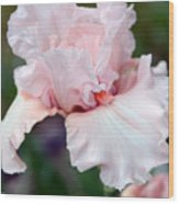 Incredibly  Iris Wood Print