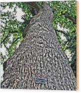 Independence Tree Wood Print