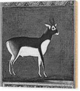 India: Black Buck Wood Print