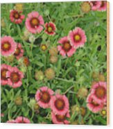 Indian Blanket Flowers Wood Print