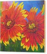 Indian Blanket Flowers Wood Print