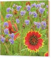Indian Blanketflowers Gaillardia Puchella Wood Print