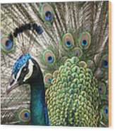 Indian Blue Peacock Puohokamoa Wood Print