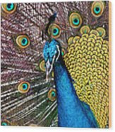 Indian Blue Peacock Wood Print