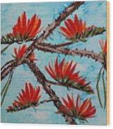 Indian Coral Tree Wood Print