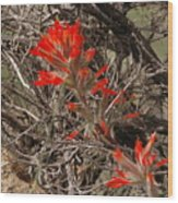 Indian Paint Brush Wood Print
