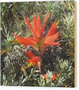 Indian Paintbrush And California Sage Wood Print