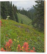 Indian Paintbrush Window Into The San Juans Wood Print