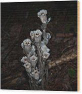 Indian Pipe Wood Print