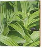 Indian Poke - Veratrum Veride-  Wood Print
