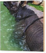 Indian Rhinoceros Wood Print