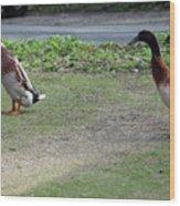 Indian Runner Ducks Wood Print