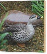 Indian Spot-billed Duck Wood Print