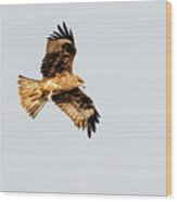 Indian Spotted Eagle Wood Print