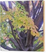 Indian Tree Wood Print
