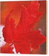Indiana Fall Wood Print
