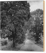 Indiana Road And Trees Wood Print