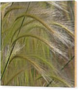 Indiangrass Swaying Softly With The Wind Wood Print