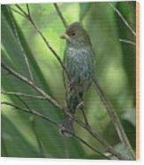 Indigo Bunting - Felts Nature Preserve - Ellenton Florida Wood Print