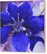 Indigo Flower Wood Print