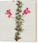 Indigo Plant Wood Print
