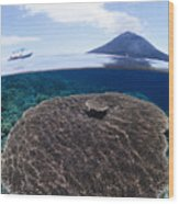 Indonesia, Coral Reef Wood Print