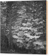 Infared Photograph Wood Print