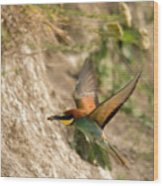 Inflight Feeding Bee Eater Wood Print