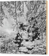 Infrared Indian River State College Hendry Campus #6 Wood Print